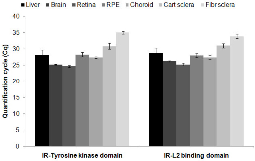Quantification cycle values for two different regions of the insulin receptor sequence in different tissues are shown. All tissues expressed the insulin receptor tyrosine kinase domain mRNA as well as the insulin receptor L2-rich binding domain mRNA. The sample size is 4 animals per tissues. Error bars represent the standard error of the mean.