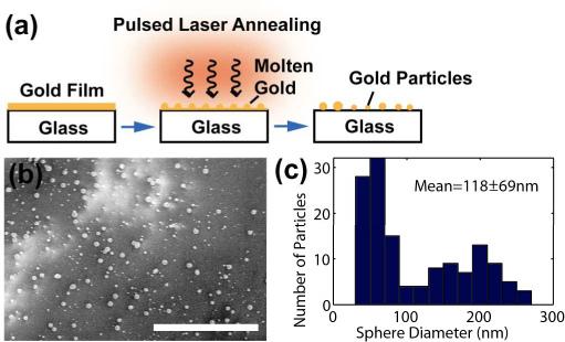 Pulsed laser annealing of gold films. (a) Schematic of the formation of gold particles. (b) SEM images of the 10 nm gold film annealed at 49.5 mJ/cm2. (c) Measured particle size distribution. Bar=5 µm.