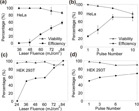 (a,c) Calcein delivery efficiency and cell viability under varying laser fluences (only irradiated with 1 pulse in each case). (b,d) Efficiency and viability under varying applied laser pulse numbers at 60 mJ/cm2 for HeLa (b) and at 36 mJ/cm2 for HEK 293T (d). The viability and efficiency values are represented as mean ± standard deviation. Number of experiments conducted are n=3 for HeLa and n=1 for HEK 293T.