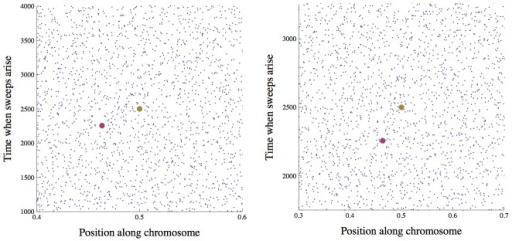 The distribution of sweeps in time across the genome.Points show the beginnings of simulated selective sweeps. The distribution over time and map length appears approximately uniform. Time is in generations from the beginning of the simulation, and position is map distance in Morgans from the end of the chromosome. In the right panel, the time scale is halved and the length scale is doubled compared to the left panel, illustrating the effect of a doubling of  on the scaled distribution of sweeps that enters into Eq. (4) for the scaled probability of fixation . If we consider a focal mutation occurring in the middle of the chromosome at generation 2500 (the large gold dot), the rescaling changes the interference it experiences from any given sweep (e.g., the one marked by the large purple dot), but the total expected interference from the whole distribution of sweeps remains unchanged. Simulation parameters are chosen such that there is strong interference: , , , .