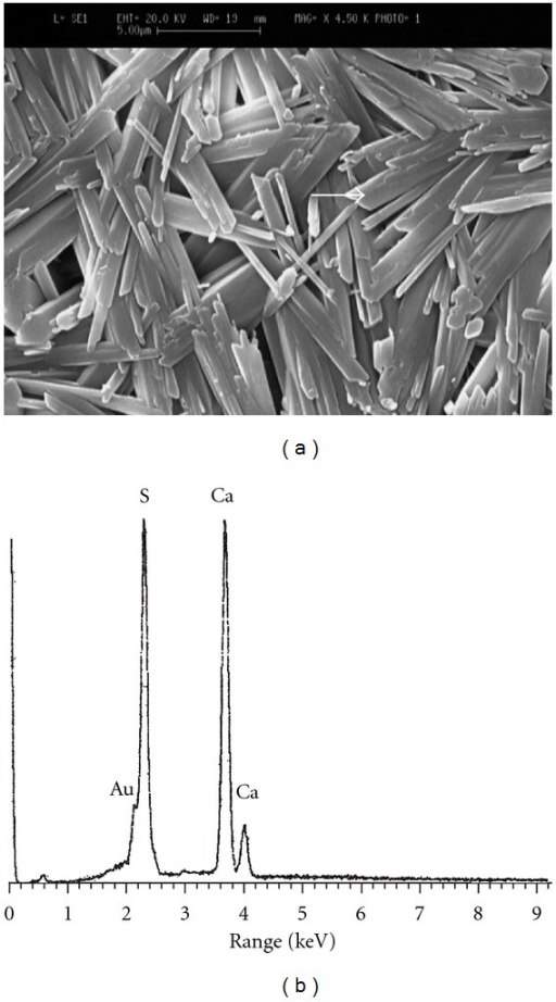 The SEM image of pure gypsum (a) along with its corresponding EDXA patterns (b).