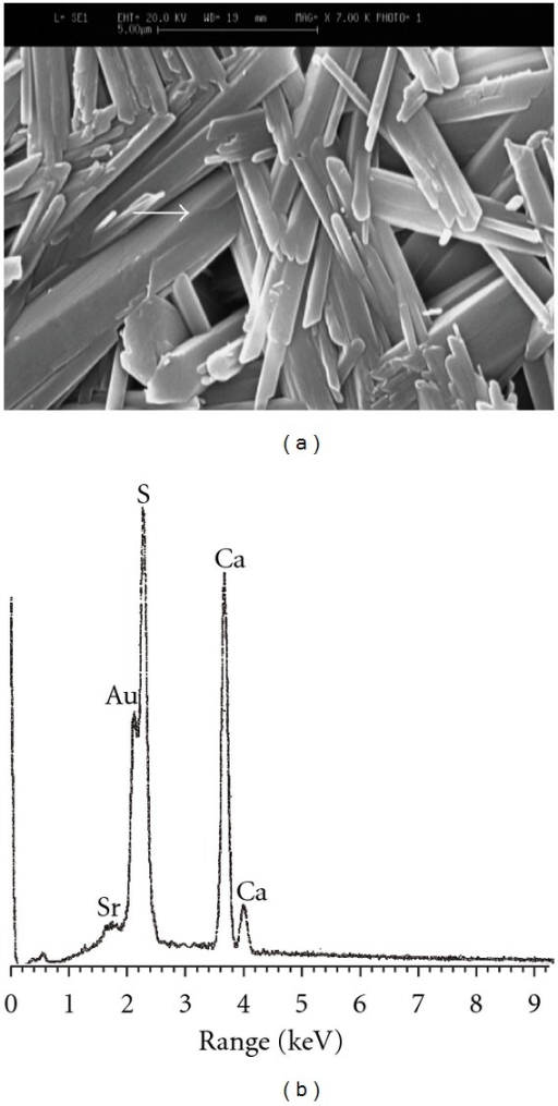 The SEM image of G-Sr1 specimen (a) along with its corresponding EDXA patterns (b).