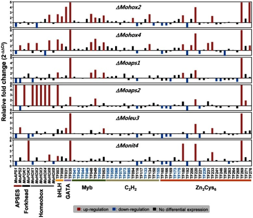 Expression profiles of 57 conidiation-specific TF genes in six TF gene deletion mutants.The mutants included ΔMoaps1, ΔMoaps2, ΔMohox2, ΔMohox4, ΔMoleu3, and ΔMonit4. Up-regulated genes in the mutants (more than 2 fold) are indicated by red bars, and down-regulated genes (less than 0.5 fold) are noted by blue bars. The genes that did not show differential expression in the six mutants are marked in blue.