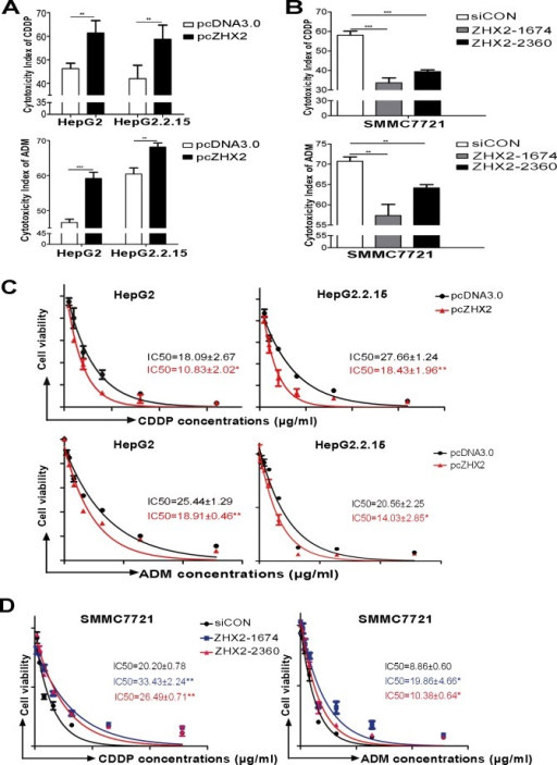 Higher ZHX2 levels increase the sensitivity of HCC cells to the cytotoxic effects of CDDP and ADMHepG2 and HepG2.2.15 cells were transfected with pcDNA3.0 or pcZHX2 (A), whereas SMMC7721 cells were transfected with siCON or ZHX2-siRNAs (B). After 24 hours, cells were treated with CDDP (upper panels) or ADM (lower panels) and cultured for another 24 hours. The cytotoxicity was calculated as described in Materials and Methods. Data are shown as the mean±SD (n=4); **p < 0.01, ***p < 0.001. (C and D) IC50 of CDDP (upper panels) or ADM (lower panels) in cell lines transfected as described above in A and B. The IC50 was calculated as described in Materials and Methods. Data are shown as the mean±SD (n=3); *p < 0.05, **p < 0.01.