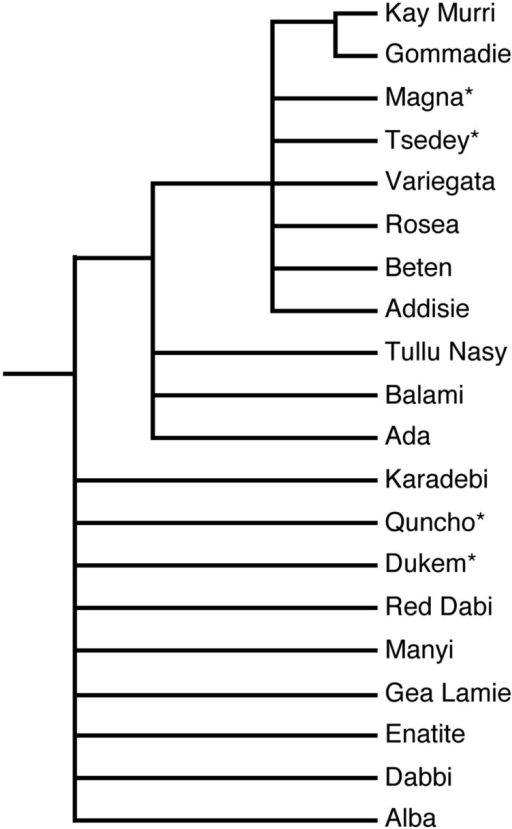 Phylogenetic tree showing the relationship among natural accessions and improved varieties of tef. The ∗ represents improved varieties. The phylogenetic tree was constructed from ∼200 bp surrounding an SSR marker located on linkage group nine (Zeid et al., 2011). Quncho, the most popular variety in Ethiopia was produced from a cross between the high-yielding Dukem variety and the white-seeded Magna variety.