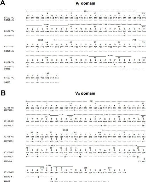 Germline sequences and somatic mutations of the R31C2 variable domains.(A) Amino acid and nucleotide sequences of the R31C2 VL domain compared with the Vκ and Jκ germline genes. (B) Amino acid and nucleotide sequences of the R31C2 VH domain compared with the VH, D and JH germline genes.