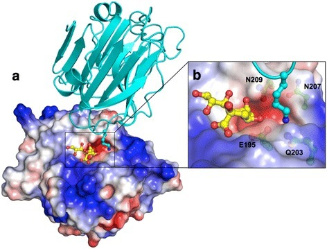 Potential functional cavity of SpCBM. a The surface electrostatic view from the top of the binding site of SpCBM and a cavity adjacent to the active site, which is occupied by a lysine from a symmetry related molecule (shown in cyan). b Close-up view of the interaction between the lysine and the protein. The solvent-accessible surface of SpCBM is coloured based on the electrostatic potential from −7 (red) to +7 (blue) kT/e, calculated using the APBS tool in PyMOL [34, 35]