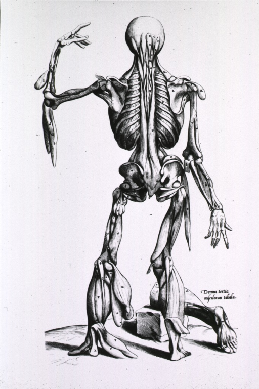 <p>Full length rear view, standing, of human figure with some muscles stripped away to reveal the bone structure; a severed leg, from the knee down, rests on a block of stone at right, detailing the bottom of the foot.</p>