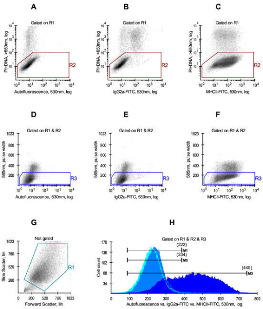 Experimental conditions for measuring MHCII-specific cellular fluorescence by flow cytometry. Tumor cells were removed from plastic with 0.25% trypsin and 0.53 mM EDTA, washed, stained with FITC-conjugated monoclonal antibodies (mAb) and analysed on a FACSCalibur™ flow cytometer. Regions R1, R2 and R3 were drawn to exclude debris (G), dead cells (A, B, C) and cellular aggregates (D, E, F). Panels A and D show cells stained with propidium iodide alone. Panels B and E show cells stained with propidium iodide and the isotype-matched control mAb (IgG2a-FITC, 1.0 μg/50 μl). Panel C and F show cells stained with propidium iodide and the mAb against human HLA-DR,DP,DQ (anti-MHCII-FITC, clone Tü39, 0.25 μg/50 μl). Panel H shows frequency distributions of cells that passed R1 & R2 & R3 logical gate. M1, M2 and M3 are the median values of autofluorescence peak (M1 = 222), isotype control peak (M2 = 234) and HLA-DR peak (M3 = 445).