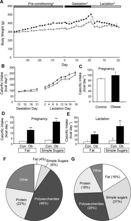 "Maternal body weight and food intake in rats fed control or obesogenic diet.Body weight (A) was recorded for 6 weeks prior to pregnancy and throughout pregnancy and lactation for the animals on the control (open symbols) or obesogenic (closed symbols) diet; calorific intake was recorded throughout pregnancy and lactation (B). Average daily calorific intake from all sources during pregnancy (C) and average daily calorific intake from fat or simple sugars during pregnancy (D) or lactation (E) for the animals on the control (Con) or obesogenic (Ob) diet. Macronutrient content of ingested food (expressed as percentage by weight) for control (F) or obese (G) dams during lactation; ""other"" includes cellulose, ash, water etc. * p<0.05 and ** p<0.01 versus control dams (n = 11–12)."