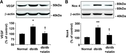 Effect of lovastatin on VEGF and Nox4 expression in retinas of db/db mice. Db/db mice and nondiabetic littermate controls were gastric gavaged with or without lovastatin (10 mg/kg/day) for 6 weeks. VEGF (A) and Nox4 (B) expression in retinas were determined by Western blotting analysis and semiquantified by densitometry (means ± SE, n = 6). *P < 0.05 or **P < 0.01 vs. nondiabetic control; †P < 0.05 vs. db/db mice.