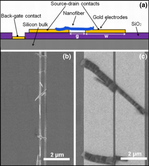 a Schematic drawing of the device platform. b, c SEM images of gold electrodes with g = 200 nm and w = 150 nm (b) and 2.4 μm (c) after p-6P deposition