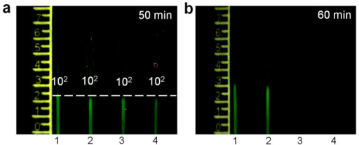 The reproducibility and sensitivity of the nuclemeter.(a) Four nuclemeters each containing identical target concentrations (102 copies HIV-1 RNA) to illustrate reproducibility. (b) Evaluation of the limits of detection of the nuclemeter. Sample chambers connected to reaction-diffusion conduits 1, 2, 3 and 4 contain, respectively, 50, 50, 5 and 5 copies of HIV RNA target.