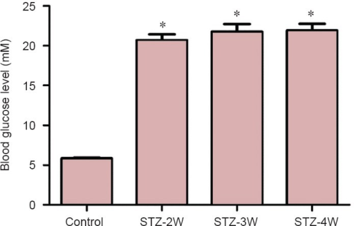 Fasting blood glucose levels in control and streptozotocin (STZ)-treated  rats.Fasting