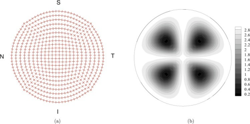 Fiber organization in the top layer of the finite element discretization of the cornea model.(a) Mean orientation of the two sets of fibers. (b) Map of the von Mises coefficient b for the statistical distribution of the orientation. High values of b define highly oriented set of fibers. Low values of b define nearly isotropic orientations.