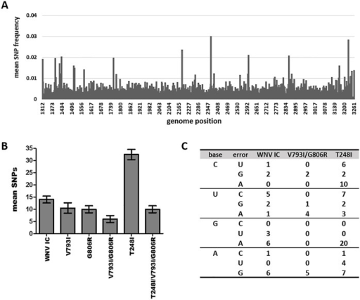 Strain-specific differences in mutational spectra breadth and composition.WNV mutant swarm characterization by deep-sequencing of nucleotides 1312–3261 (ENV/NS1) following 72h growth on mosquito cell culture. A. Mean distribution of genomic diversity (single nucleotide polymorphisms [SNP]) of 2 replicates of WNV-IC across the sequenced region. The distribution of mutations was similar among strains. B. Mean number of minority SNPs identified for individual WNV strains at frequencies greater than 0.5%. C. Distribution of substitution types among WNV strains.