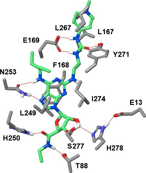 Binding mode of compound 2 in the X-ray structure of human A2a in the agonistic conformation. Residues critical for potency and selectivity are indicated. The urea fragment of the C2-side chain is H-bonded to E-169 and Y-271. The terminal positively charged guanidinium moiety is exposed to the extracellular environment and squeezed between residues L167 and L267. H-bonds are shown by red dotted lines. Carbon atoms of compound 2 are shown in light green. Nonpolar hydrogens are not shown for clarity.