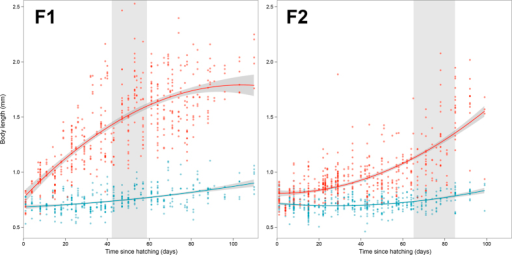 Body length change over time for two generations (F1, F2) of Neanura muscorum.Red points represent the experimental group provided with slime mould diet, blue points represent the control group on algae-covered plane tree bark. Fitted models shown with 95% confidence intervals (F1: experimental, y = 1.4205 + 6.1211 x − 1.5328 x2, weighted-R2 = 0.6906; control, y = 0.7486 + 0.9638 x + 0.1662 x2, wR2 = 0.6315. F2: experimental, y = 0.9771 + 3.8062 x + 1.0992 x2, wR2 = 0.6976; control, y = 0.7181 + 0.4565 x + 0.3624 x2, wR2 = 0.7575. Shaded area represents respective F1 or F2 sub-group age range at first egg laying event.