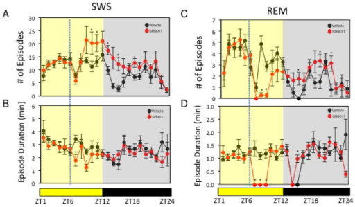 Administration of SR9011 Alters Sleep ArchitectureEffect of SR9011 administered at ZT6 (analysis of data from Figure 1A) on SWS (number of episodes (A) and episode duration (B)) and on REM sleep (number of episodes (C) and episode duration (D)). potential differences between treatments were assessed by repeated measure two-way ANOVA followed by Bonferroni post hoc test with significance *P < 0.05
