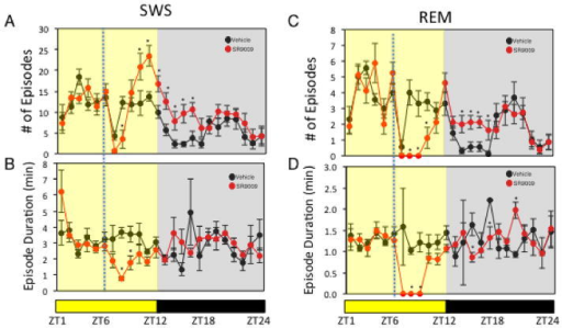 Administration of SR9009 Alters Sleep ArchitectureEffect of SR9009 administered at ZT6 (analysis of data from Figure 3A) on SWS (number of episodes (A) and episode duration (B)) and on REM sleep (number of episodes (C) and episode duration (D)). potential differences between treatments were assessed by repeated measure two-way ANOVA followed by Bonferroni post hoc test with significance *P < 0.05
