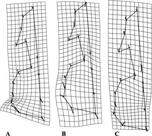 Transformation grids for the first Principal Component (PC) of the RWA.Grids depict intraspecific cranial morphological variation. The grids for all species: C. brevicauda (A), C. castanea (B) and C. perspicillata (C).