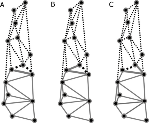 Patterns recovered for cranial modularity for C. brevicauda (A), C. castanea (B), and C. perspicillata (C), showing the neurocranium (grey-solid lines) and the splachnocranium (black-dotted lines).Thicker lines and dots highlight the region where modularity varies between species.