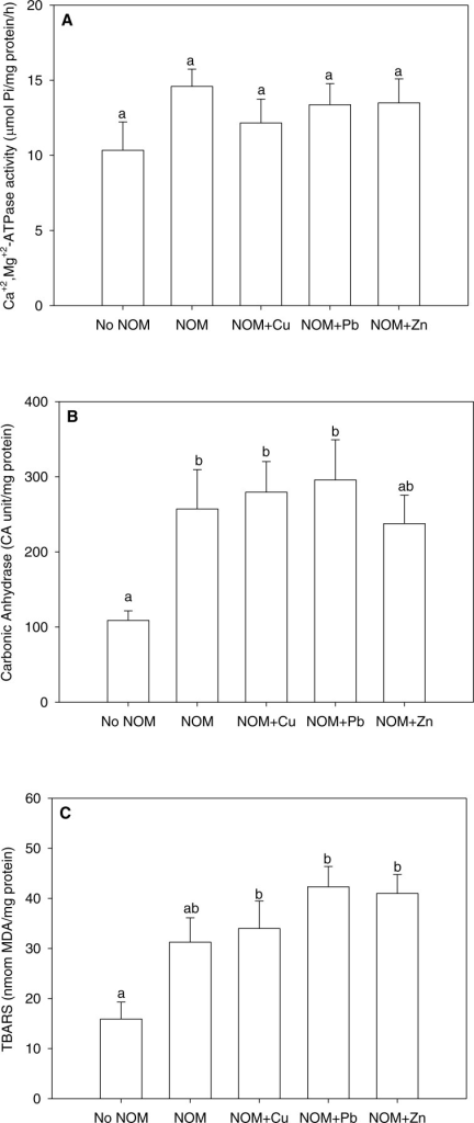 The results of an analysis in which all NOMs were considered the same and pooled.(A) Ca2++Mg2+-ATPase activity, (B) carbonic anhydrase activity, and (C) lipid peroxidation of M. galloprovincialis larvae exposed to copper (6 µg/L), lead (20 µg/L), or zinc (25 µg/L) for 48 h at the beginning of development. See the 'Discussion' section for details. Mean values represent control condition (Bamfield sea water with no added NOM or metal), average of all NOM exposures (no added metal), and NOMs with additional copper, lead or zinc. No NOM, control condition; NOM, natural organic matter only added; NOM + Cu, natural organic matter plus copper; NOM + Pb, natural organic matter plus lead; NOM + Zn, natural organic matter plus zinc. Bars sharing the same letter are not significantly different. Data are means ± standard error (N = 15 replicates of 2,500 larvae each).