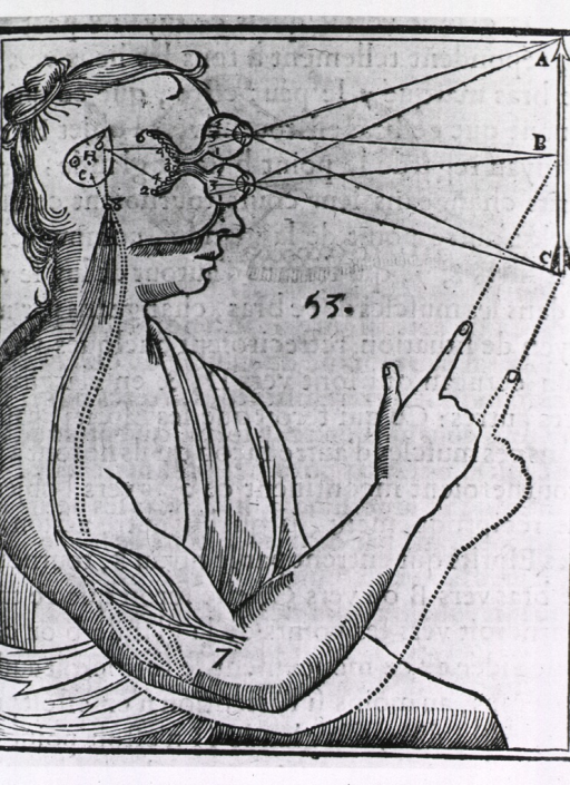 <p>Human in profile looking at an arrow; a depiction of the coordination of the senses, whereby vision provides the stimulus to the pineal gland which coordinates a motor response.</p>