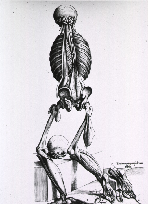 <p>Full length rear view of human figure without shoulders and arms; slightly kneeling on a stone slab; some muscle definition, mostly bones; detail of the bottom of the foot.</p>