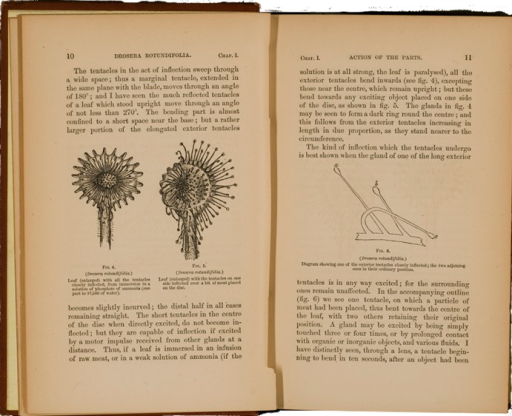 <p>Image of facing pages (p. 10-11) from Insectivorus plants / by Charles Darwin. New York : D. Appleton and Co., 1875. Page 10 has two illustrations of the leaf of the Drosera rotundifolia. Page 11 has detailed illustration of the tentacles on the leaf.</p>