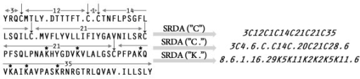 "Conversion of amino acid sequence into a polypeptide pattern using different key residues. SRDA(""C"") -conversion by the key Cys residues marked by arrows above the original sequence, the number of amino acids separating the adjacent cysteine residues is also indicated; SRDA(""C."") takes into account the location of Cys residues and translational termination symbols denoted by points in the amino acid sequence; (""K."") - conversion by the key Lys residues designated by asterisks and the termination symbols."