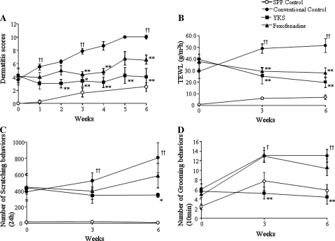 The effects of YKS and fexofenadine on dermatitis score (a), TEWL (b), the numbers of scratching behaviors (c) and grooming behaviors (d) for AD-like skin lesions in NC/Nga mice. a The skin lesions of the conventional control group were aggravated as time goes on. Both the YKS- and the fexofenadine-treated groups significantly inhibited the aggravation of skin lesions in NC/Nga mice from 3 weeks after the start of the experiments. The dermatitis score of the SPF control group was not more than a minor increase. b The TEWL of the conventional control group was increased as time goes on. The YKS- and the fexofenadine-treated groups significantly inhibited the increase of TEWL compared with the conventional control mice from 3 weeks. The TEWL of the SPF group, which had no skin lesions, was not increased. c Scratching behaviors of the conventional control and the fexofenadine-treated groups increased as time goes on. The YKS-treated group significantly decreased the scratching behaviors compared with the conventional control group after 6 weeks. The scratching behaviors of the SPF group were not increased. d Grooming behaviors of the conventional control group and also the fexofenadine-treated group were increased under social isolated conditions. The YKS-treated group significantly decreased the grooming behaviors compared with the conventional control mice from 3 weeks. The grooming behaviors of the SPF group increased under social isolated conditions. SPF control: unfilled circle, conventional control: filled circle, YKS: filled square, fexofenadine: filled triangle. Data are presented as means ± SE (n = 5–6). †p < 0.05, ††p < 0.01 vsersu SPF control, *p < 0.05, **p < 0.01 versus conventional control, one-way ANOVA followed by Bonferroni/Dunn test