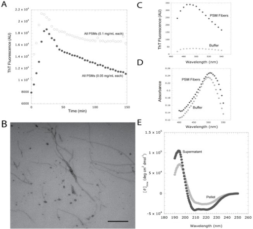 "Synthetic phenol soluble modulin peptides bind ThT and polymerize into amyloid-like fibers.(A) Normalized fluorescence intensity of [white circle] 0.1 mg/mL of each PSM peptide or [black circle] 0.05 mg/mL of each PSM peptide in 2 mM ThT. Fluorescence emission was measured at 495 nm after excitation at 438 nm. Assays were repeated in triplicate and all demonstrated a similar trend. (B) 48 hours after mixing 100 µg/mL each of the seven PSM peptides (α1–4, β1–2, and δ-toxin), fibril structures are readily observed by TEM. (C) PSM fibers [black circle] display a ThT fluorescence peak around 482 nm compared to a ThT-only blank [grey circle]. (D) PSM fibers [black circle] produce a characteristic Congo red (CR) absorbance ""red-shift"" associated with amyloid binding compared to a CR-only blank [grey circle]. (E) Pelleted PSM fibers [grey circle] display a greater β-sheet content than the remaining supernatant [black circle]. Assays were repeated in triplicate and displayed similar trends. Bar indicates 500 nm."
