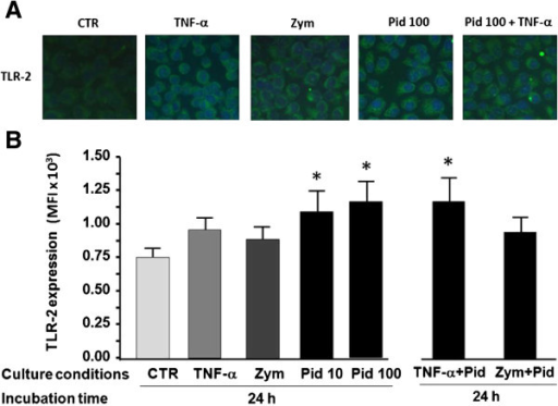 Immunofluorescence and flow cytometry analysis of TLR-2 expression induced by pidotimod. (A) Representative images of TLR-2 expression collected by fluorescence microscopy in cell cultures untreated (CTR) or treated with TNF-α, zymosan, pidotimod (Pid 100 μg/ml) or pidotimod (Pid 100 μg/ml) plus TNF-α for 24 h; B) Histograms displaying the flow cytometric analysis of TLR-2 expression on cells treated with TNF-α, zymosan, pidotimod (Pid 10, 100 μg/ml), or pidotimod (Pid 100 μg/ml) plus TNF-α (TNF-α Pid or zymosan (Zym + Pid, for 24h. TLR-2 expression is quantified as mean fluorescence intensity (MFI) on the ordinate and the different culture conditions are shown on the abscissa. The data are expressed as mean ± SEM.*p < 0.05 versus control. The results shown are representative of three independent experiments.