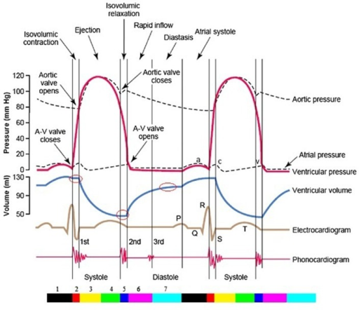 The Entire Two Cardiac Cycle Diagram  Which Contains In