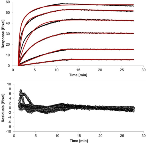 Kinetics of HSA-specific antibodies binding to immobilized HSA. Plots generated by applying the bivalent analyte model (red lines) overlay the plots associated with each antibody concentration (black lines; from top to bottom: 3.4 µM, 0.9 µM, 0.2 µM, 53.9 nM, 13.5 nM, 3.4 nM). Values resulting from the average of two sensing spots and the subtraction of reference surface signals from raw signal measurements are presented on the graph. The graph below depicts the residuals of the fits.
