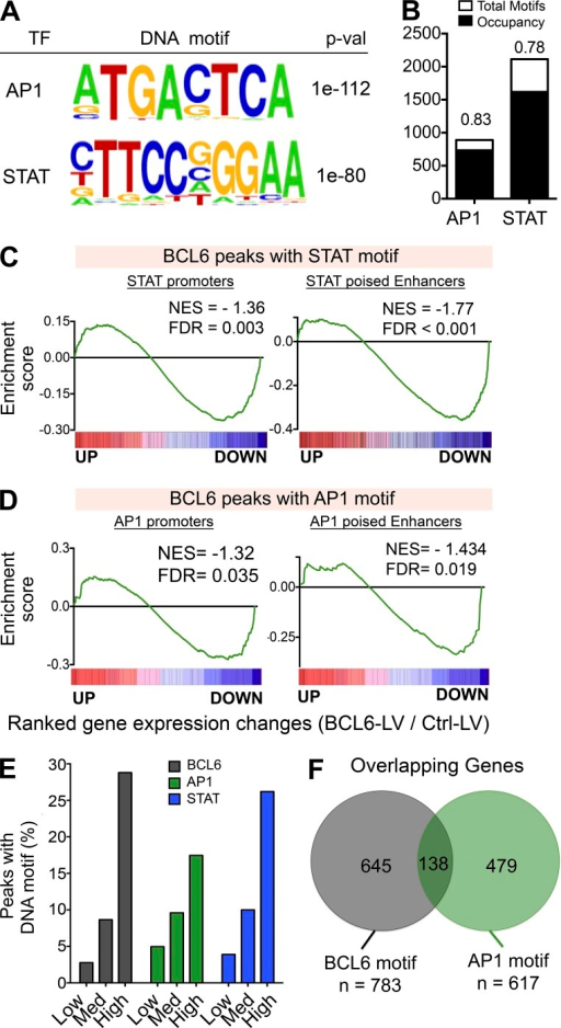 BCL6-mediated repression of key Tfh target genes is linked to interaction with AP1 and recruitment to AP1 DNA–binding sites. (A) De novo motif analysis of BCL6 GC Tfh peaks using HOMER identified the AP1 and STAT DNA motifs among the most highly enriched in Tfh BCL6 peaks. P-values are indicated. (B) Human GC Tfh BCL6-binding sites identified in this study containing AP1 or STAT motifs that were homologous to sites in the mouse genome were queried for AP1 and STAT binding based on published Th17 ChIP-seq datasets. Bound versus unbound fractions are indicated. (C and D) GSEA analysis based on global gene expression changes after BCL6 lentiviral induction in CD4 T cells versus control lentivirus. Up and down indicate the relative gene up- or down-regulation after BCL6 expression. Data are from six independent replicates. The gene sets tested were as follows: (C) promoters with BCL6 peaks containing STAT motifs (left) and poised enhancers with BCL6 peaks containing STAT motifs (right); (D) promoters with BCL6 peaks containing AP1 motifs (left) and poised enhancers with BCL6 peaks containing AP1 motifs (right). FDR is based on 1,000 permutations. (E) Fraction of BCL6 peaks containing BCL6, AP1, or STAT motifs in peaks with lower, intermediate, or high BCL6 enrichment. (F) BCL6 and AP1 motif containing BCL6-bound peaks are primarily found in separate sets of gene.