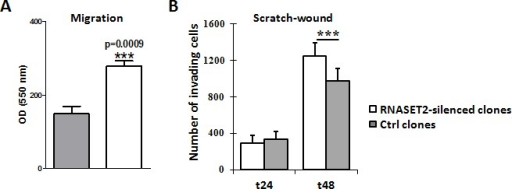 Silencing of RNASET2 in OVCAR3 affects cell motilityA) A migration assay performed on pools of control vs. RNASET2-silenced OVCAR3 cells showed a significant increase in cell motility in RNASET2-silenced cells. B) A scratch test on the same cells also showed an increase in cell-motility in RNASET2-silenced cells when compared to control OVCAR3 cells at 48 hours after wounding. Asterisks indicate statistical significant values analyzed by Student's t-test. *** p<0,001.
