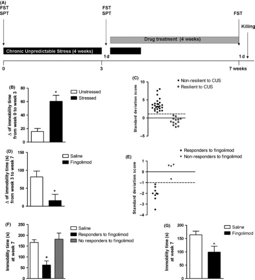 Antidepressant-like activity of Fingolimod in mice exposed to chronic unpredictable stress (CUS). The design of experiment #1 is shown in (A). Mice were exposed to CUS for 4 weeks, with 1 day of interval after the end of the third week for the analysis depressive-like behavior in the forced swim test (FST) and sucrose preference test (SPT). A four-week treatment with saline or Fingolimod (3 mg kg−1, once daily) was started at the beginning of the 4th week of CUS. Mice were killed 1 day after the last FST. Cumulative data of the FST in all unstressed and CUS (stressed) mice (n = 21 and 38, respectively) is shown in (B), where data (means + SEM) are expressed as the difference of immobility time (Δ) between values obtained at week 3 and time 0. *P < 0.05 (Student's t-test; t(57) = 3.53) versus unstressed mice. Mice resilient (n = 13) and nonresilient (n = 25) to stress are shown in (C), where the cutoff value for resilience was considered <1 Standard Deviation Score (SDS) with respect to the mean value of immobility time in unstressed mice. SDS = (x − μ)/σ, where x = the immobility time of each CUS mouse; μ and σ = mean and SD of the immobility time in unstressed mice. The overall effect of Fingolimod on the immobility time in the FST is shown in (D), where data (means + SEM) are expressed as the difference of immobility time (Δ) between values obtained at week 7 and week 3. *P < 0.05 (Student's t test; t(20) = 2.62) versus mice treated with saline (n = 9 and 13 mice treated with saline and Fingolimod, respectively). Mice responsive and not responsive to the antidepressant-like activity of Fingolimod are shown in (E), where the cutoff for drug response was considered ≤1 SDS with respect to the mean value of immobility time in CUS mice treated with saline. Absolute values of immobility time in nonresilient CUS mice treated with saline (n = 9) or Fingolimod (n = 13, divided into nine responders and four nonresponders) are shown in (F), where values are means + SEM. One-way ANOVA + Tukey's t-test; F(2,19) = 12.86; P < 0.05; post hoc analysis: (*) P < 0.05 versus all other values. In (G), data obtained in responders and nonresponders to Fingolimod were combined and compared to data obtained in mice treated with saline. *P < 0.05 (Student's t-test; t19 = 2.141).
