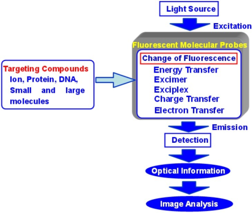 Concept of fluorescent molecular probes and their biological applications.