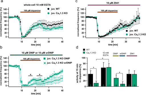 Calcium-dependent, sensitised D2-autoreceptor responses in SN DA neurons from juvenile Cav1.3 KO mice are mediated by T-type Ca2+ channels and the neuronal calcium sensor NCS-1.Dopamine D2-AR experiments and SN DA data presentation are similar to that for Fig. 2. (a) Experiments in the presence of 10 mM EGTA (whole-cell current clamp), to buffer free internal Ca2+ in SN DA neurons from juvenile WT (n = 6) and Cav1.3 KO (n = 7) mice. (b) Experiments in the presence of either DNIP (yellow, D2/NCS-1 interacting peptide) or scrambled DNIP (as controls, blue, srDNIP) to block D2-AR/NCS-1 interactions in SN DA neurons from juvenile Cav1.3 KO mice (DNIP: n = 11; srDNIP: n = 10, perforated patch or on-cell recordings). Mean basal pacemaker frequencies were not affected by DNIP (see Table 1). (c) Experiments in the presence of the T-type Ca2+ channel blocker Z941 (10 μM; purple bar, perforated patch) in SN DA neurons from juvenile WT (n = 10) and Cav1.3 KO (n = 8). (d) Activity of SN DA neurons from (a–c) (and from Fig. 2a) at the last minute of dopamine application (min 15). Note that buffering of free internal Ca2+ (EGTA) is inducing prominent D2-AR desensitisation in both SN DA neurons from juvenile WT and KO mice, while DNIP (but not srDNIP), as well as Z941, both introduce WT-like D2-AR desensitisation in SN DA neurons from juvenile Cav1.3 KO mice. All data are shown as mean ± SEM, WT data in black and KO data in green. Significant differences are marked by asterisks. Data values and statistics are detailed in Table 1.
