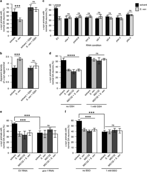 GSH attenuates enhanced α-synuclein proteotoxicity and proteasomal dysfunction associated with the metabolite. Nematodes were exposed to the bacterial metabolite chronically for all neurodegeneration assays as described in the Figure 1 legend whereas animals were exposed to the metabolite semi-acutely when they expressed alpha synuclein in bodywall muscle cells, as described in the Figure 2 legend. RNAi was performed in a worm strain whereby RNAi knockdown would occur only in dopaminergic neurons (cell-autonomous RNAi).33 (a) Animals expressing α-syn in the dopaminergic neurons were assessed for neurodegeneration in the context of 1 mM GSH. Data represented as mean±S.D.; n=30 animals analyzed per treatment in 3–4 replicates. ***P<0.001 was assessed by two-way ANOVA with Tukey's post hoc test. (b) Animals expressing α-syn in the bodywall muscle cells were assessed for apparent aggregate density in the context of 1 mM GSH. Data represented as mean±S.D.; n=30 animals analyzed per treatment in 3–4 replicates. ***P<0.001 was assessed by two-way ANOVA with Tukey's post hoc test. (c) Animals bearing dopaminergic overexpression of SID-1 (a dsRNA transporter) in a mutant background for sid-1, used to selectively target RNAi to dopaminergic neurons in an α-syn background were exposed to 1 mM IPTG plates and either empty vector control (EV) or RNAi treatment paradigms affecting the UPS at 6 days post hatching. RNAi was initiated at the L4 larval stage to exclude potential developmental defects. Data represented as mean±S.D.; n=30 animals analyzed per treatment in 3–4 replicates. ***P<0.001 was assessed by two-way ANOVA with Tukey's post hoc test. (d) Animals were treated with 10 μM MG132 with 1 mM GSH in the context of neurodegeneration through enhanced α-syn toxicity elicited by the S. ven metabolite. EtAc and 0.1% DMSO were used where appropriate to serve as solvent controls. Animals were placed on MG132 concentrations at the larval L4 stage to exclude the possibility of developmental defects. Data represented as mean±S.D.; n=30 animals analyzed per treatment in 3–4 replicates. ****P<0.0001 was assessed by two-way ANOVA with Tukey's post hoc test. (e) Animals were treated with 10 μM MG132 (using 0.1% DMSO as a solvent control) and metabolite as described in (a) in the context of cell-autonomous RNAi reduction of the GSH synthesis enzyme gcs-1 or empty vector control (EV). Data represented as mean±S.D.; n=30 animals analyzed per treatment in 3–4 replicates. ***P<0.001 was assessed by two-way ANOVA with Tukey's post hoc test. (f) Animals were treated with 10 μM MG132 as described in (a) in conjunction with 1 mM buthionine sulfoximine (BSO) in the context of neurodegeneration through enhanced α-syn toxicity elicited by the S. ven metabolite. EtAc and 0.1% DMSO were used where appropriate to serve as solvent controls. Data represented as mean±S.D; n=30 animals analyzed per treatment in 3–4 replicates. ***P<0.001 was assessed by two-way ANOVA with Tukey's post hoc test