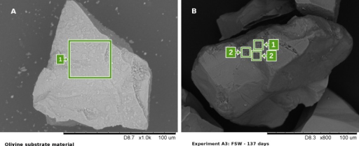 (A) SEM–EDX micrograph of unreacted olivine (substrate material)with very clear angular features and sharp edges. The Mg-to-Si atomicratio in area 1 typically lies between 2 and 2.5. (B) SEM–EDXmicrograph of an olivine particle after being subjected to continuousmovement in FSW during 137 days (experiment A3). On the surface ofthe same olivine particle, abrupt changes in Mg-to-Si atomic ratioscan be observed within small distances. Areas denoted with 1 are characterizedby Mg-to-Si atomic ratios of 2–2.5, while Mg-to-Si atomic ratiosin areas denoted with 2 showed values of around 1. Such locations,where the Mg-to-Si ratio decreases well below 2, are considered localweathering sites.