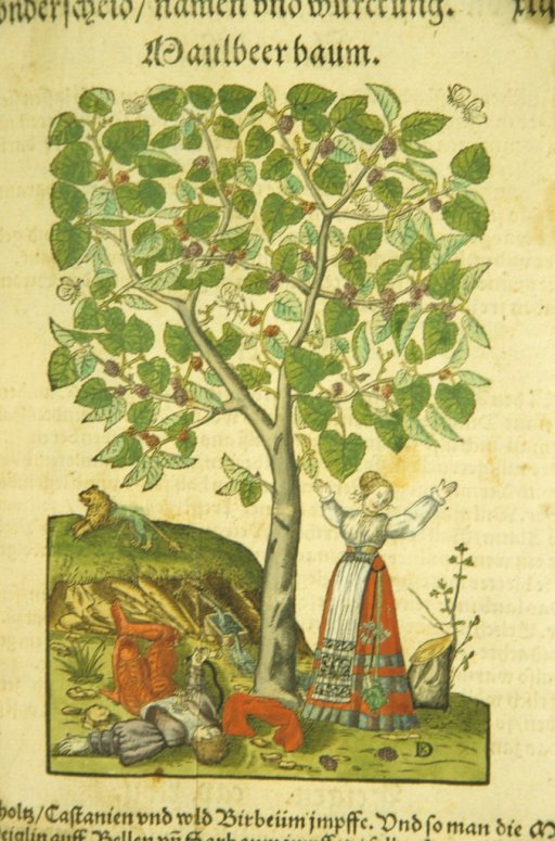 <p>Illustration of a scene from the Pyramus and Thisbe myth as described by Ovid. Thisbe arrives at the mulberry tree and throws up her arms at the sight of the dying Pyramus who lies next to the tree. The handle of a knife protrudes from his chest. Butterflies fly amidst the leaves of the fruitful tree and the lion is shown running away in the distance.</p>