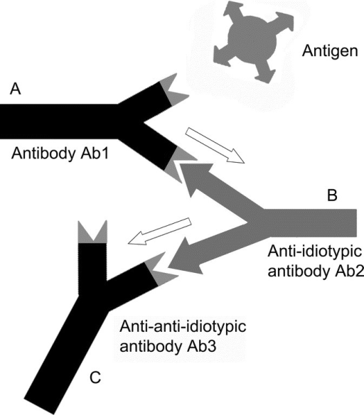 A The Idiotypic Network An Antigen Ag Is Recognized By