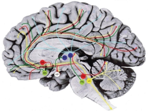 The Reticular Activating System Yellow Red And Green Open I