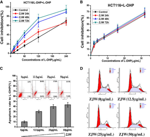 ZJW modulates the MDR phenotype in a dose- and time-dependent manner. (A&B) CCK-8 assay was used to detect the cellular inhibition of L-OHP in HCT116 cells and HCT116/L-OHP cells treated with ZJW at 50 μg/mL for 24, 48, and 72 h. (C) Flow cytometry analysis of apoptosis with Annexin V-FITC/PI binding to HCT116/L-OHP cells after treatment with ZJW at 0, 12.5, 25, and 50 μg/mL for 48 h. (D) Flow cytometry analysis was used to distinguish cells in different phases of the cell cycle as Methods described.