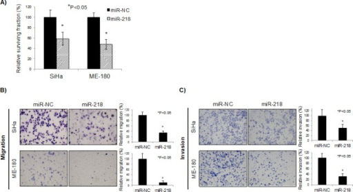 miR-218 reduces survival, migration, and invasion in vitroA) Clonogenic assays were performed by seeding SiHa and ME-180 cells transfected with 10 nM each of pre-miR negative control (miR-NC) or pre-miR-218 (miR-218). At 48 hrs post-transfection, cells were re-seeded at low density in 6-well plates. After 10-14 days incubation, colonies were stained and counted. B) Representative image (left) and quantification bar graph (right) of migrated SiHa and ME-180 cells. Migration assays were performed by seeding SiHa and ME-180 cells transfected with miR-NC or miR-218 (10 nM each) in trans-well chambers. After 48 hrs incubation, the number of migrated cells were stained and counted. C) Representative image (left) and quantification bar graph (right) of invaded SiHa and ME-180 cells. Invasion assays were performed by seeding SiHa and ME-180 cells transfected with miR-NC or miR-218 (10 nM each) in Matrigel invasion chambers. After 48 hrs incubation, the number of invaded cells were stained and counted. A-C: Bar graphs represent mean ± SEM from triplicates. *P<0.05, miR-NC: pre-miR negative control; miR-218: pre-miR-218.