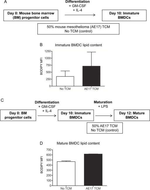 Mesothelioma-derived factors may promote lipid accumulation in immature bone marrow-derived murine DCs.Murine bone marrow (BM) progenitor cells cultured with GM-CSF and IL-4 were exposed to TCM from the AE17 mesothelioma cell line (A). At day 10, immature BMDC lipid levels were measured by BODIPY staining (B). Immature BMDCs were matured for 2 days using LPS and were co-exposed to 50% AE17 TCM (C) before lipid levels were analyzed (D). Pooled data in (B) and (D) is from 2 experiments. All data is shown as mean ± SEM.