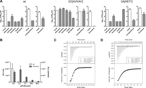 Mutations in viral protein 2C confer resistance to dibucaine, pirlindole, and zuclopenthixol. (A) BGM cells were transfected with in vitro-transcribed full-length genomic RNA of wt CV-B3 or the 2C(A224V,I227V,A229V) (AVIVAV) or 3A(H57Y) mutant virus and treated with 5 μM dibucaine, 10 μM pirlindole, 10 μM fluoxetine, 2 mM GuHCl, 1 μM the PI4KIIIβ inhibitor BF738735, 3 μM zuclopenthixol, or 10 μM formoterol or mock treated. Cells were lysed at 8 h p.i., and the virus titer was determined by endpoint titration. Titers are displayed as log CCID50 per milliliter, and means and standard deviations were calculated from three replicates. *, below the detection level. (B) Cells were transfected with in vitro-transcribed wt or 2C(A224V,I227V,A229V) replicon RNA and treated with the indicated amounts of dibucaine or mock treated. Firefly luciferase activity was determined at 7 h posttransfection. (C and D) Binding of dibucaine to wt (C) and mutant (D) 2C Del36 proteins was analyzed by ITC. Representative examples of the raw data are depicted at the top, and the integrated data are depicted at the bottom. Data are shown fitted to a one-site binding model.